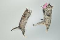 jumping, cute, playing