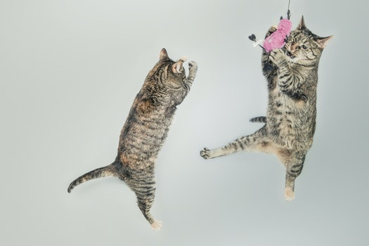 Free stock photo of jumping, cute, playing, animals