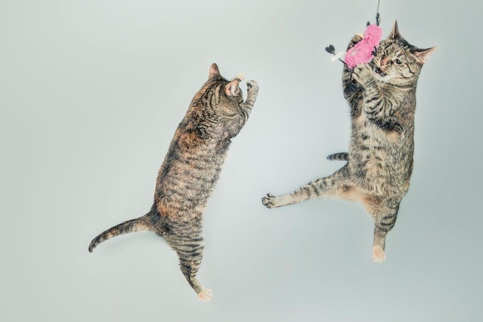 Cats Photopresta
