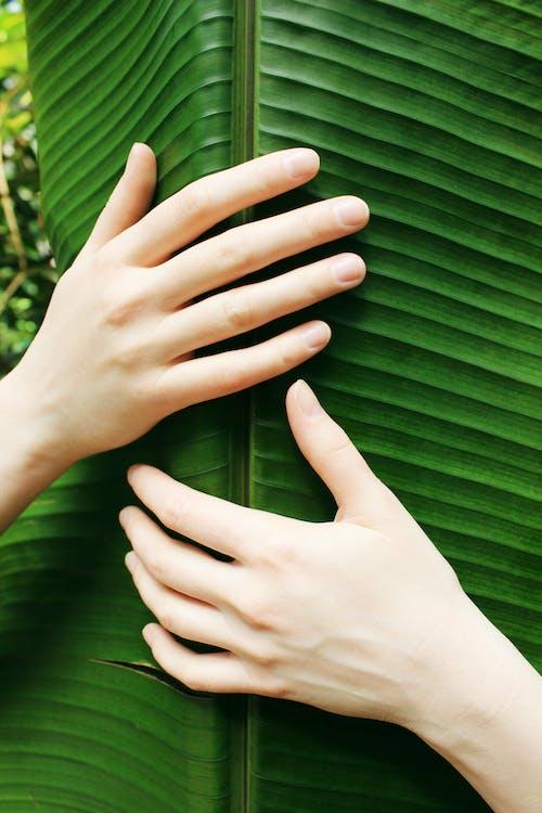 Foto profissional grátis de amor, árvore, atraente, aumento