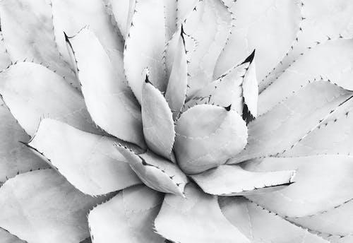 Foto profissional grátis de abstrair, abstrato, agave, agaven