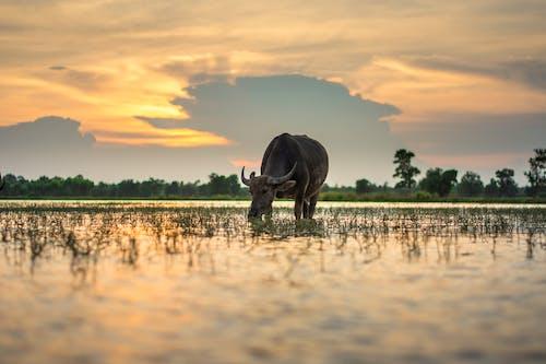 Foto profissional grátis de agricultura, água, alvorecer, área