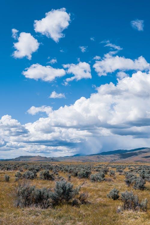 Plants growing on dry terrain under blue cloudy sky