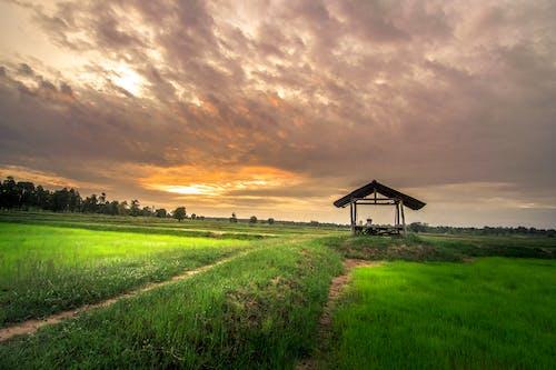 ağaçlar, alan, arazi, bulutlar içeren Ücretsiz stok fotoğraf