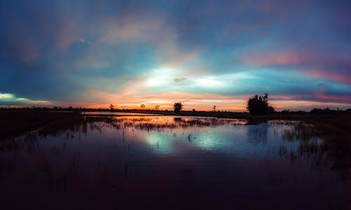 Gratis lagerfoto af aften, græs, landbrugsjord, malerisk
