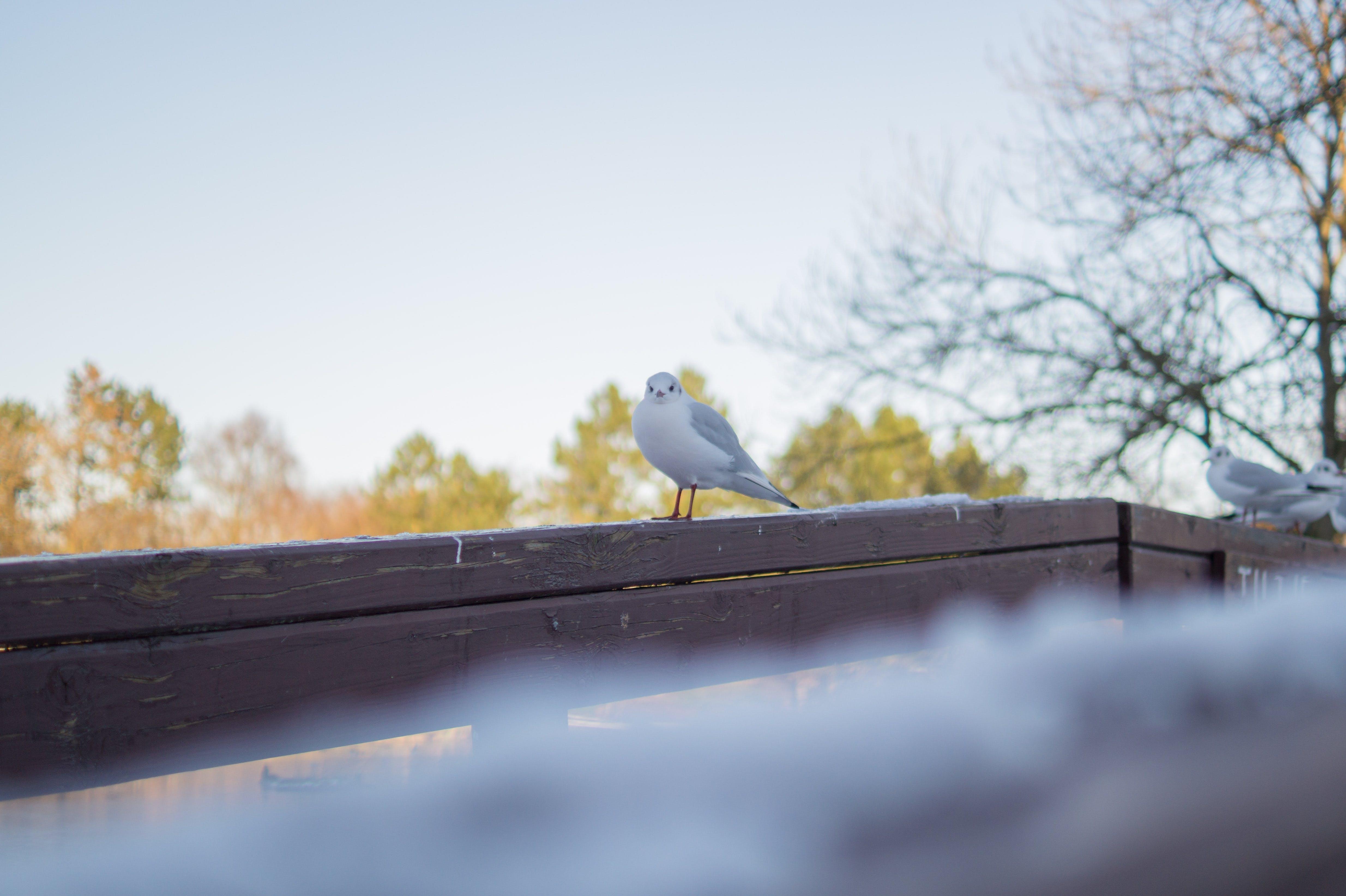 動物, 止まり木の無料の写真素材