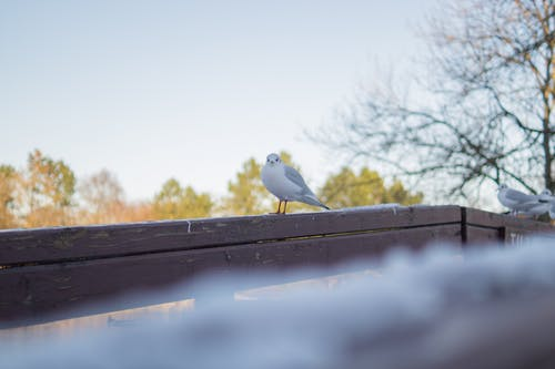 White and Gray Bird on Brown Wooden Handrail