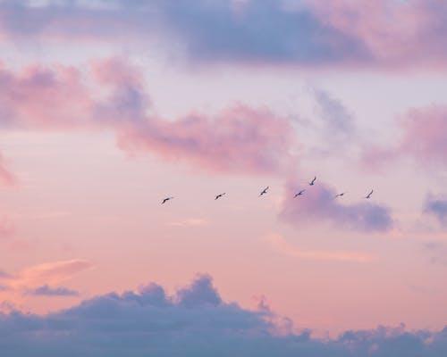 Birds Flying Under Orange Clouds