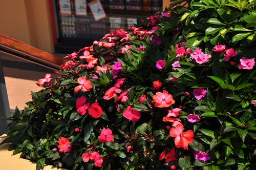 Free stock photo of beautiful flower, flowers