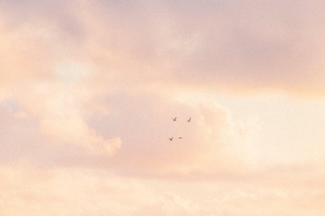 Kostenloses Stock Foto zu birds_flying, blau, blauer himmel