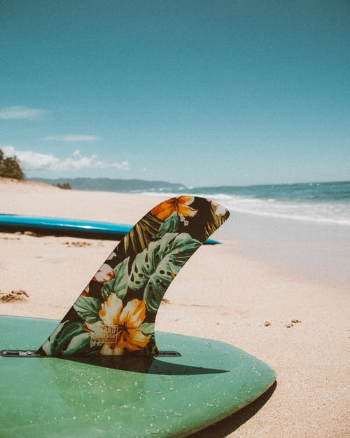 Black and White Butterfly on Green Surfboard on Beach