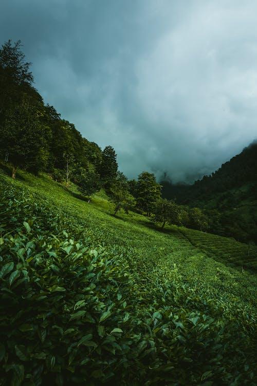 Imagine de stoc gratuită din ağaç, alçak bulutlar, arazi manzarası, arbore