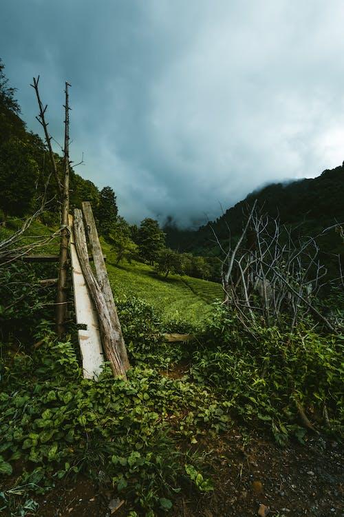 Imagine de stoc gratuită din ağaç, apă, arazi manzarası, arbore