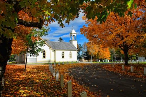 Imagine de stoc gratuită din arbori, aur, biserică, cale