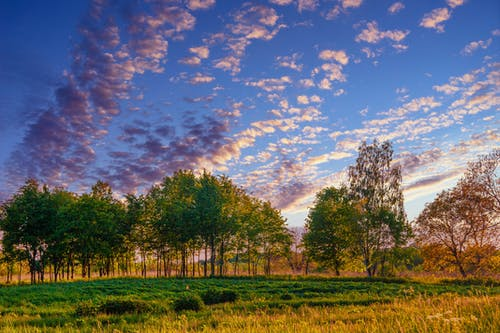 Green Grass Field With Trees Under Blue Sky and White Clouds