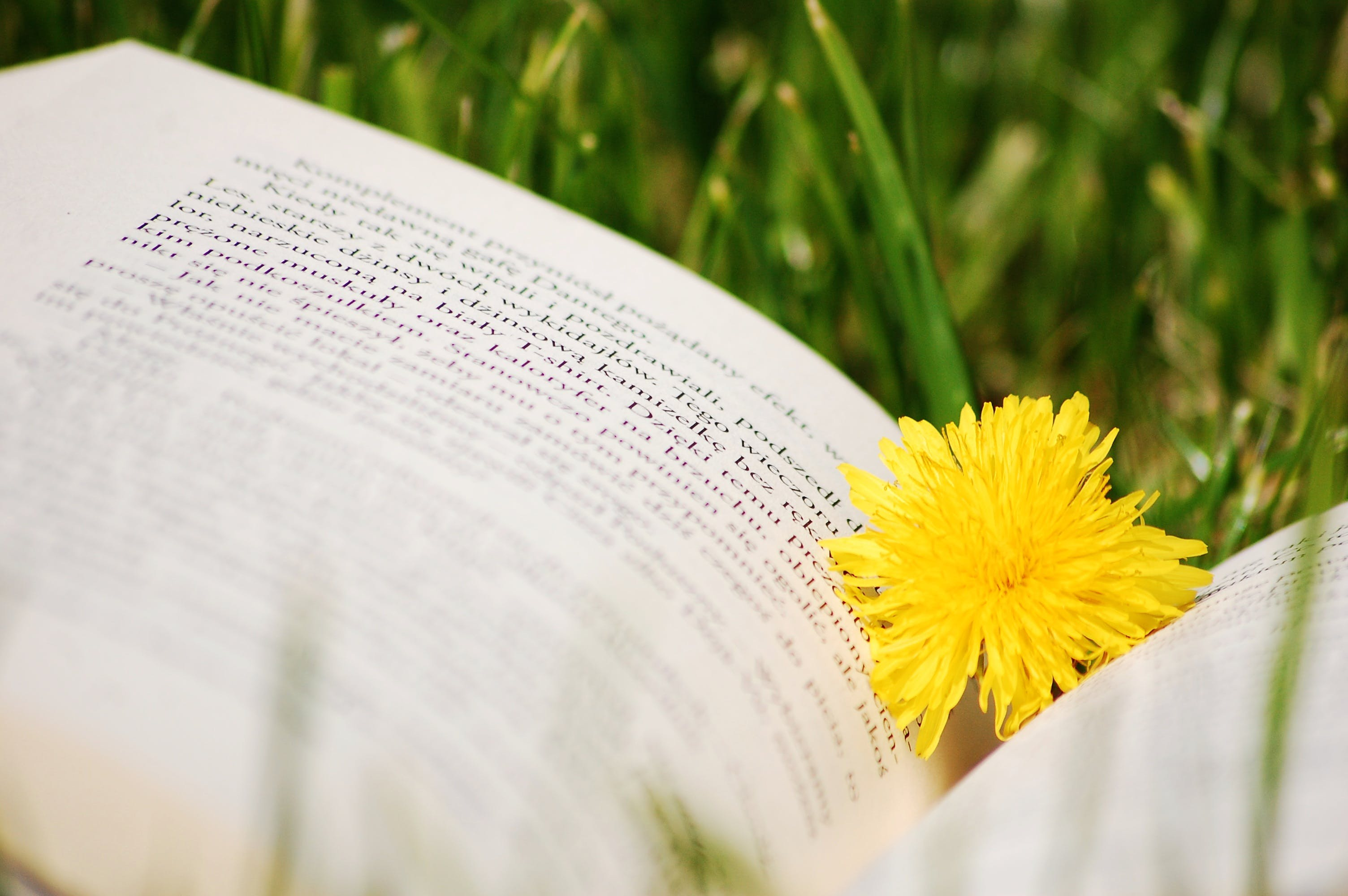 Bokeh Photography of Yellow Flower on Top of White Book