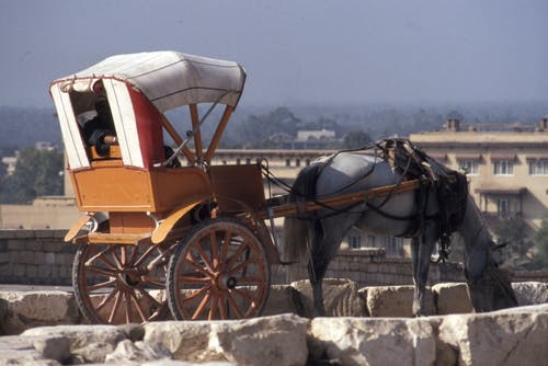 Horse Carriage on Gray Concrete