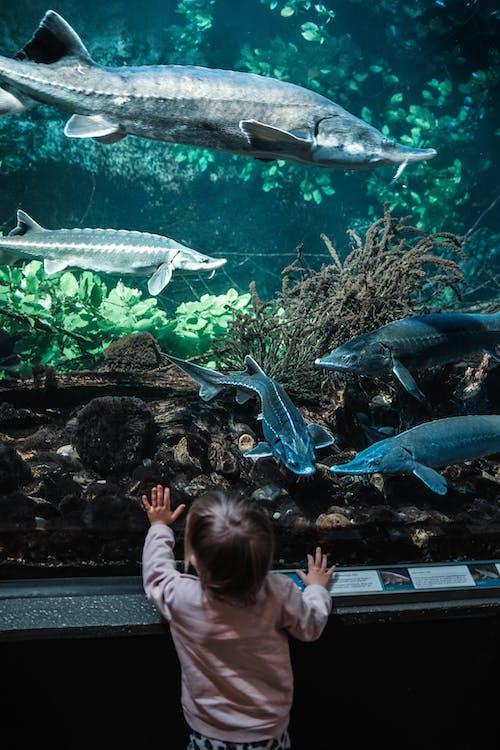 Fotos de stock gratuitas de acuario, adentro, admirar