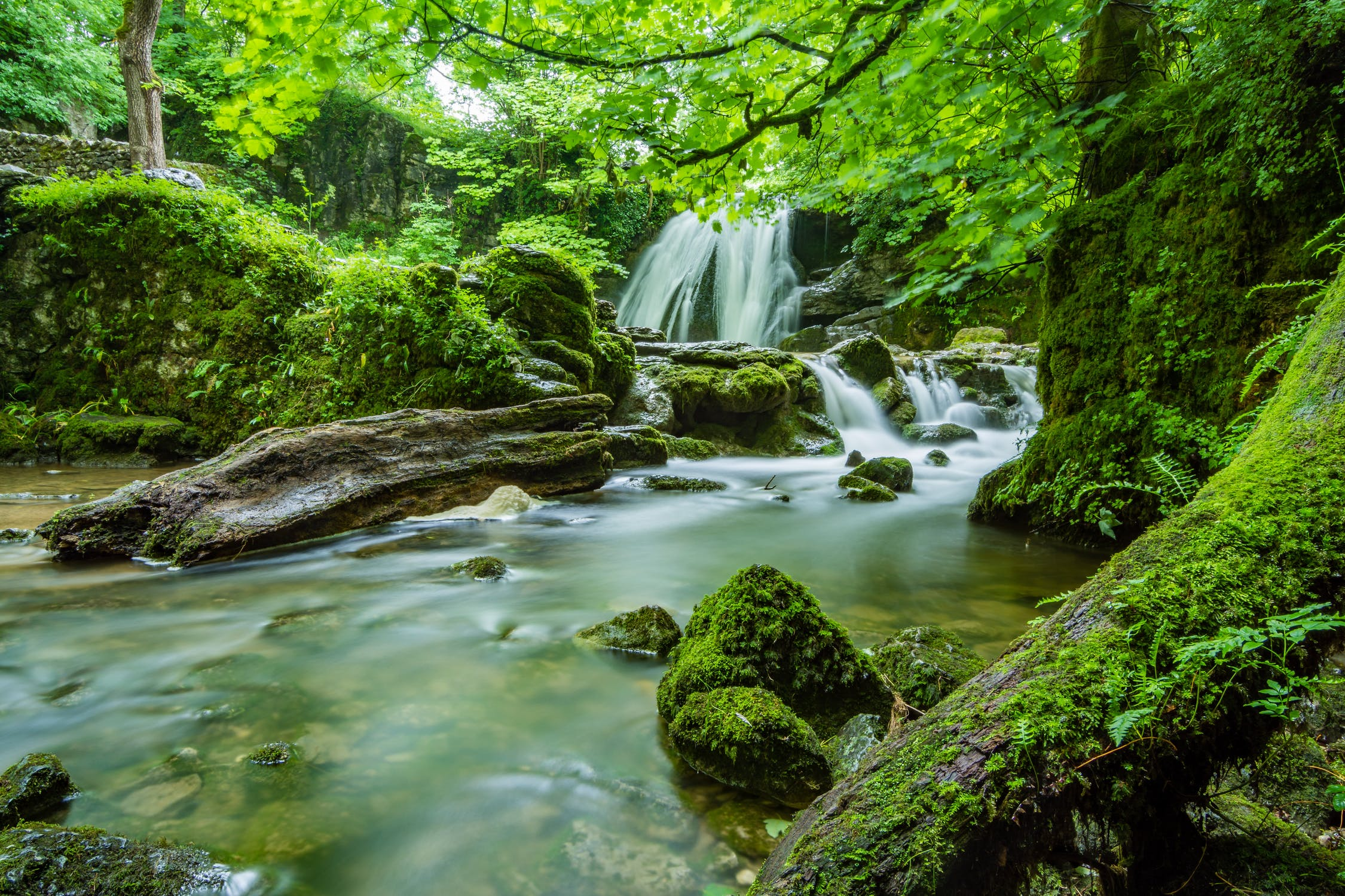 waterfall surrounded by green trees