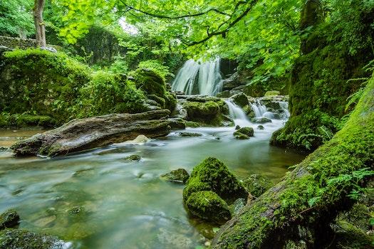 Kostenloses Stock Foto zu holz, landschaft, natur, wasser