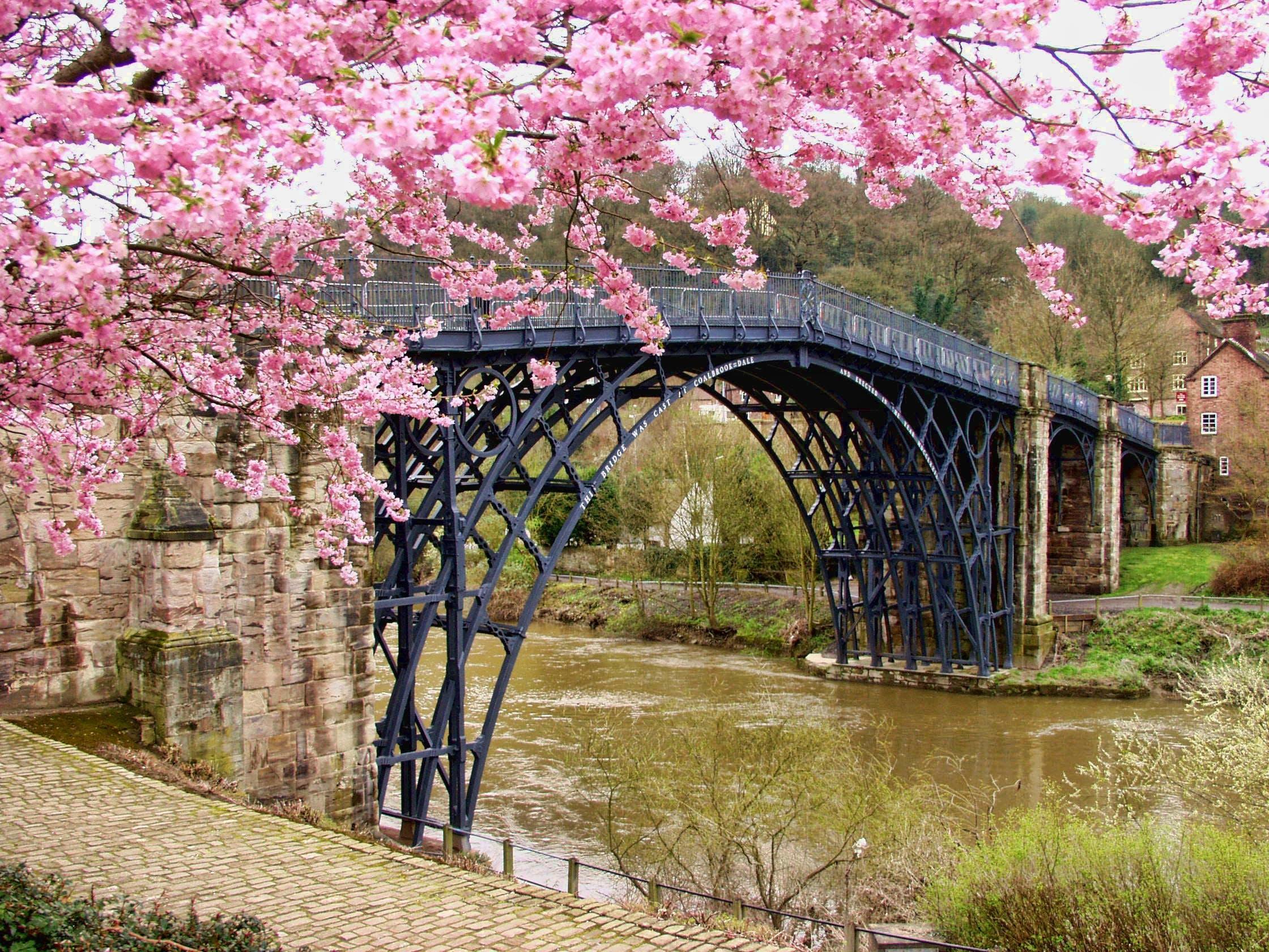 Cherry Blossom Tree Beside Black Bridge