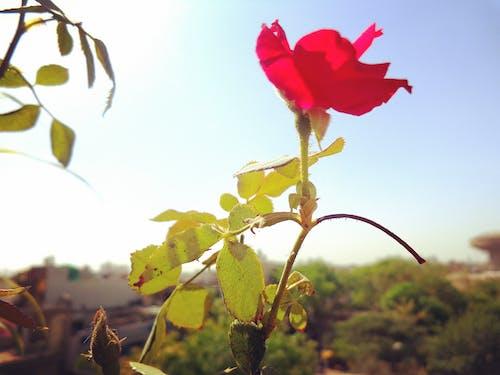 Free stock photo of daylight, fair weather, flower pot