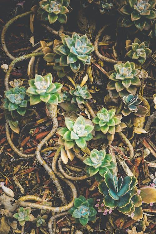 Gratis lagerfoto af baggrund, blad, blomst, Botanisk