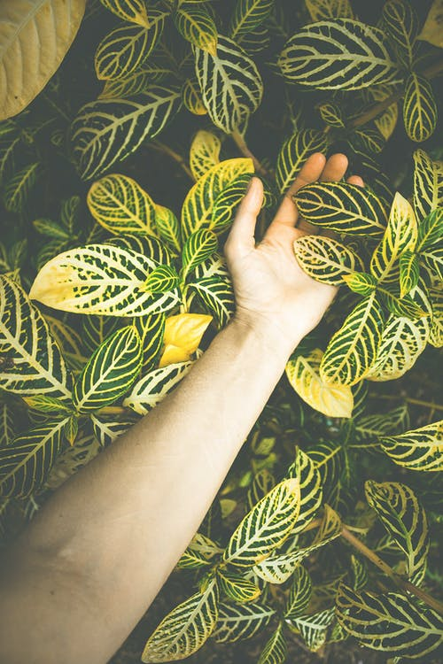 Gratis lagerfoto af arm, arme, blad, blomst