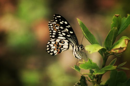 Closeup of striped wild butterfly with colorful wings sitting on thin green twig