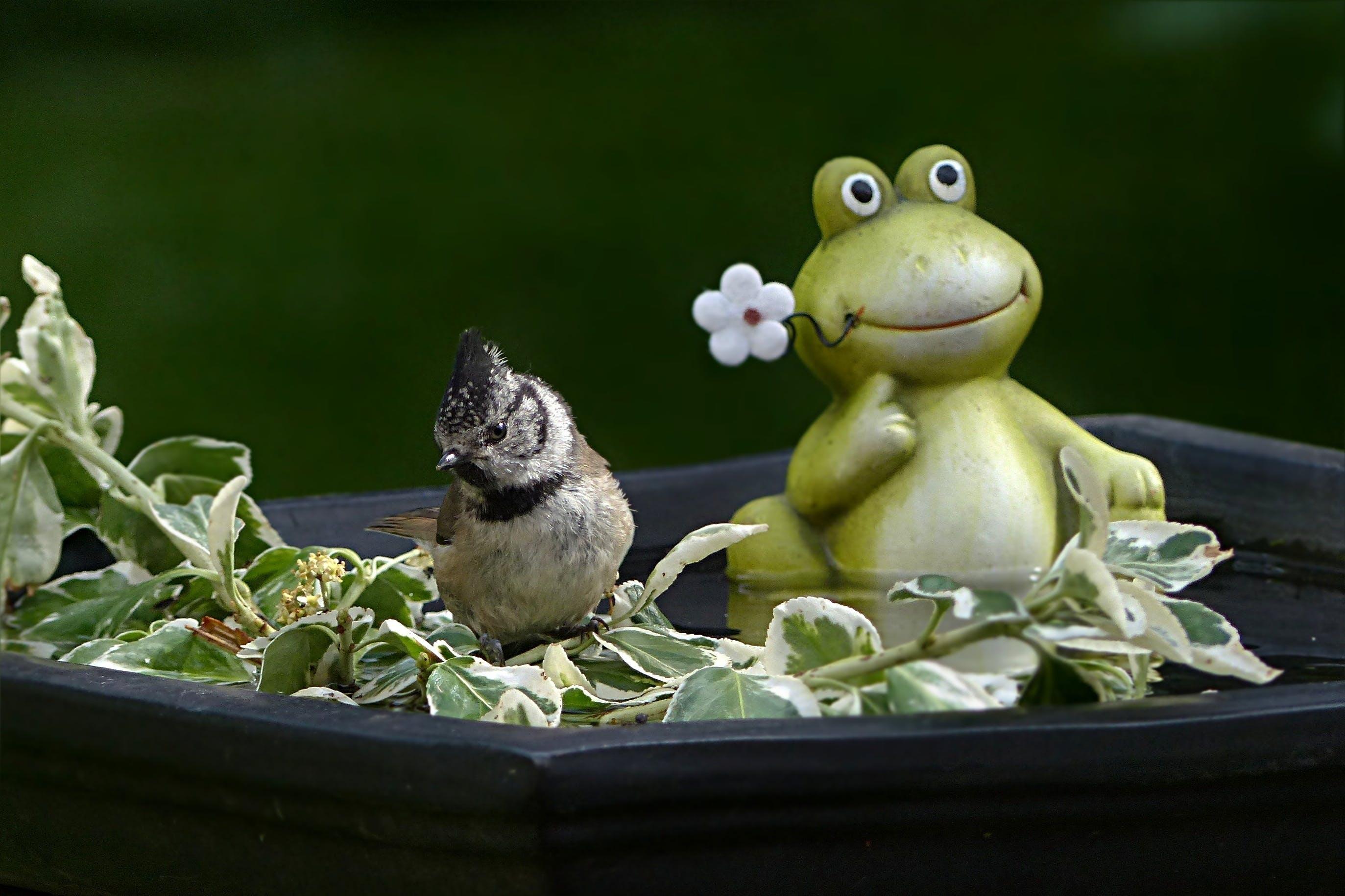 Free stock photo of bird, tit, frog, swim