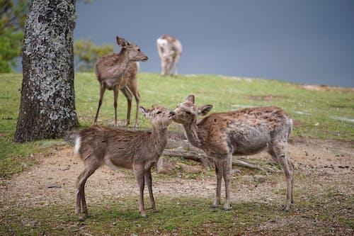 Little deer pasturing on green meadow near lake
