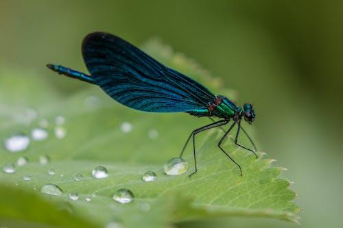 Photos gratuites de ailes, animal, biologie, bleu