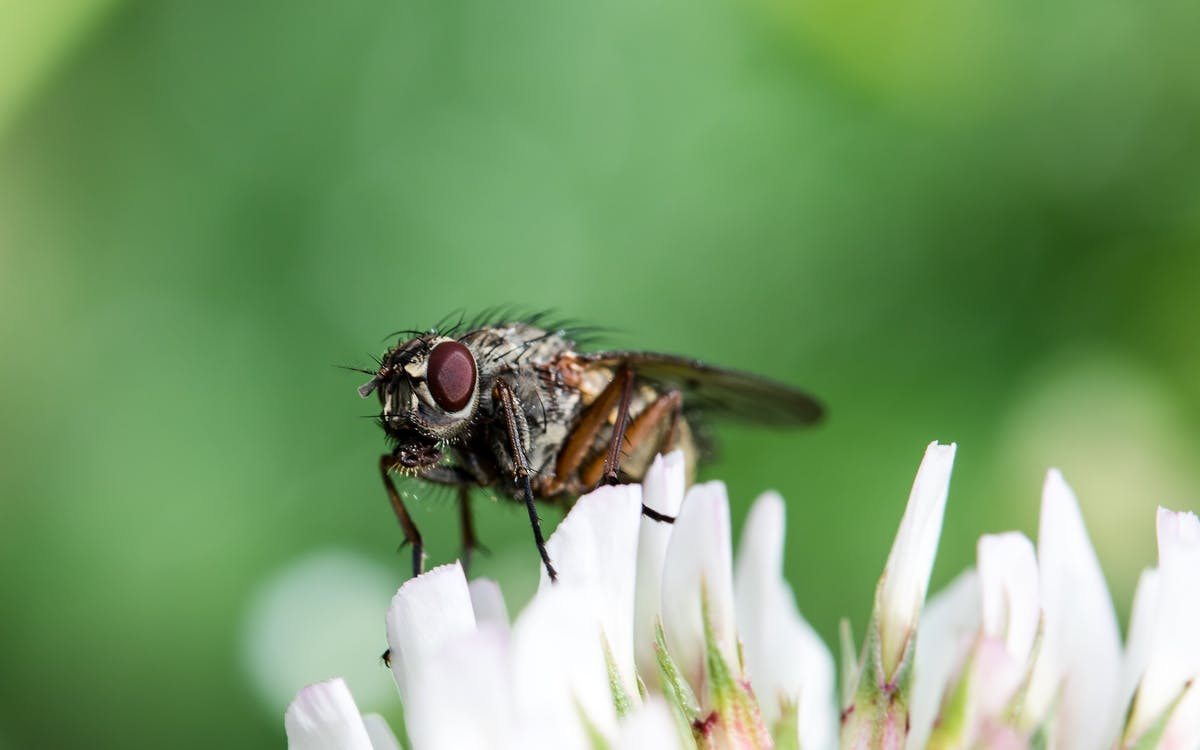 Micro Photography of Fly on White Flower