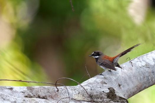 Free stock photo of cute, indonesia, little bird, halmahera