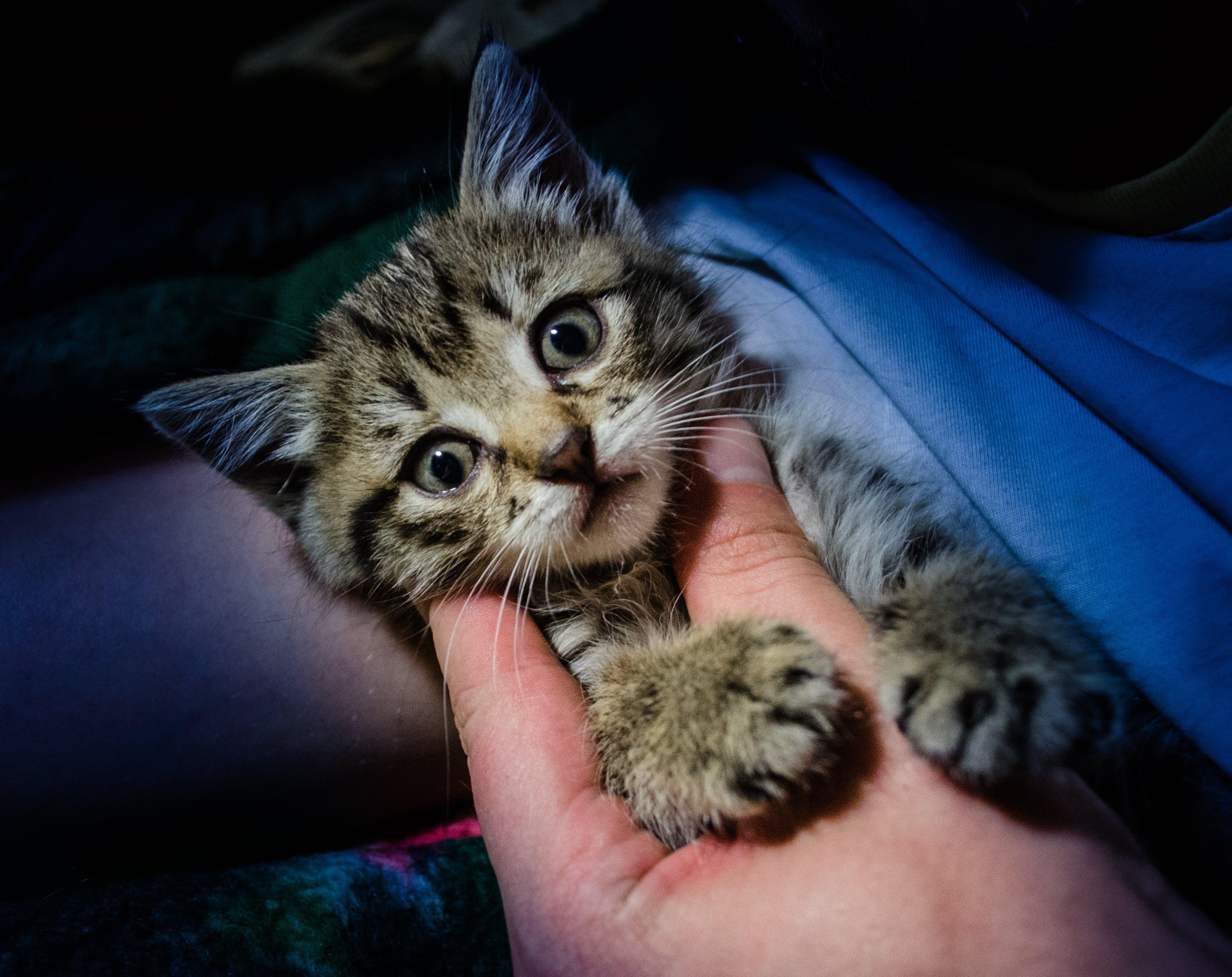 가정의, 고양잇과 동물, 귀여운, 눈의 무료 스톡 사진