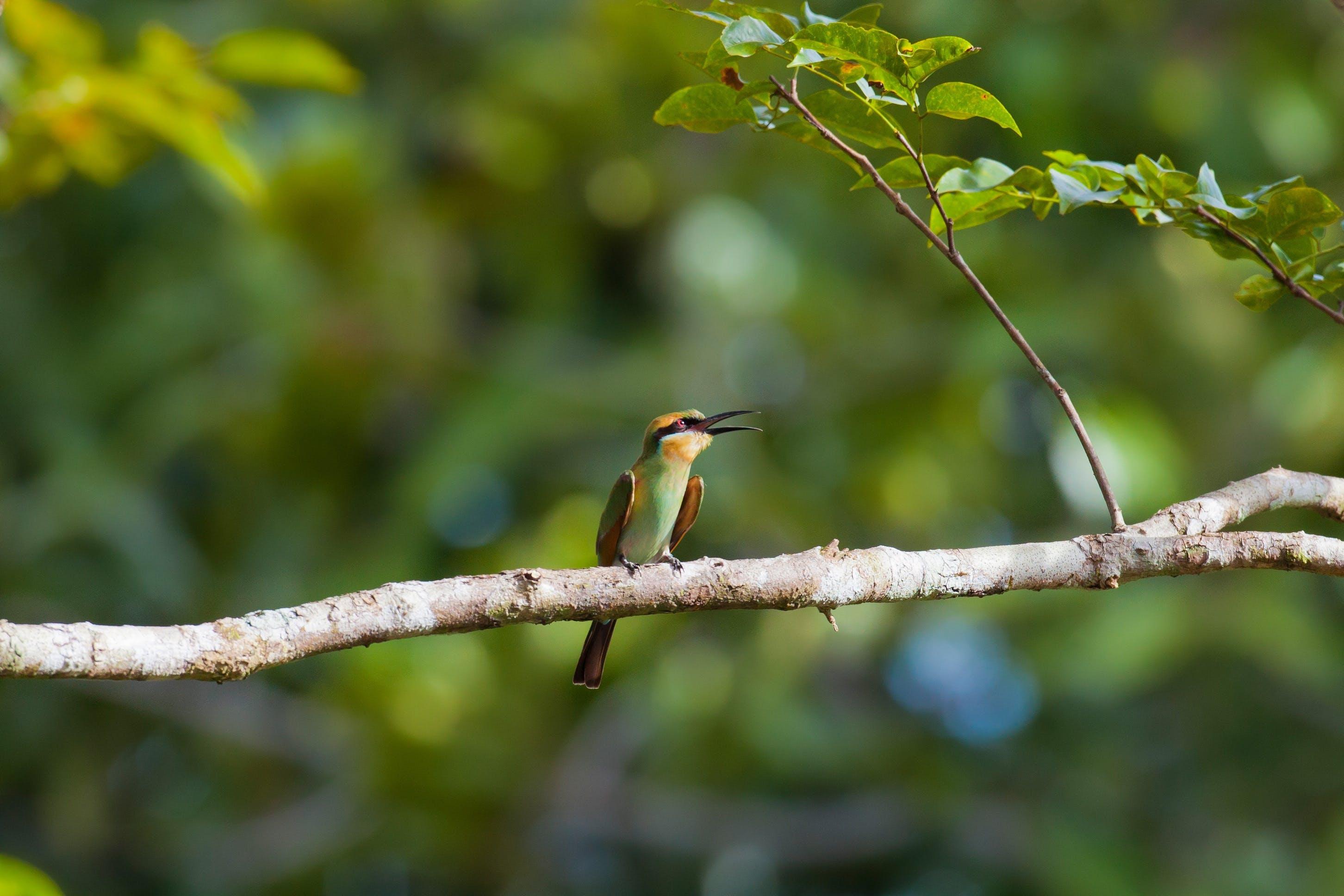 Green Hummingbird on Tree Trunk
