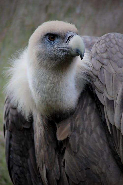Imagine de stoc gratuită din animal, aripi, aviar, cioc