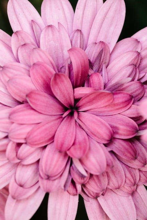 instagramのストーリーの背景, バックグラウンド, ピンクの花の無料の写真素材