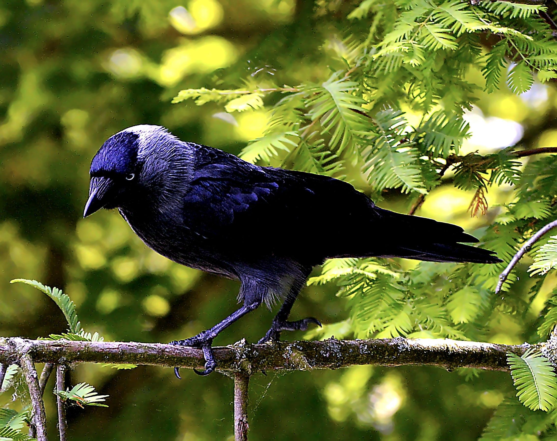 Free stock photo of nature, bird, animal, eyes
