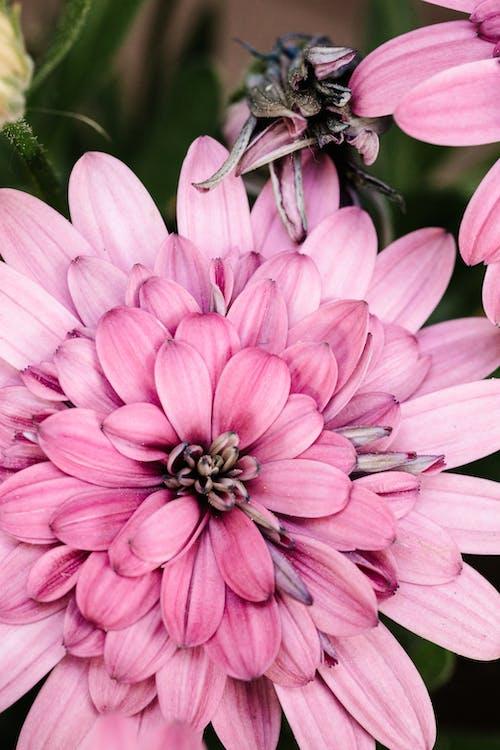 Foto d'estoc gratuïta de antecedents de la història d'instagram, bonic, flor, flor rosa