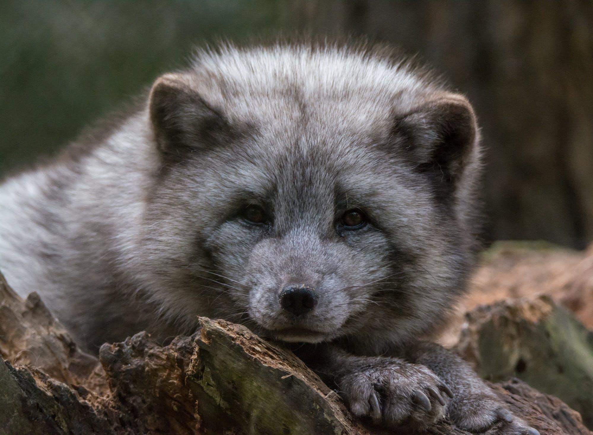 Free stock photo of animal, cute, fur, wildlife