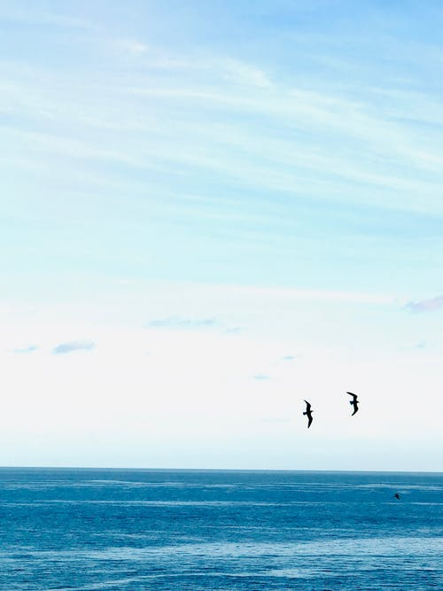 Birds Flying Over the Blue Sea