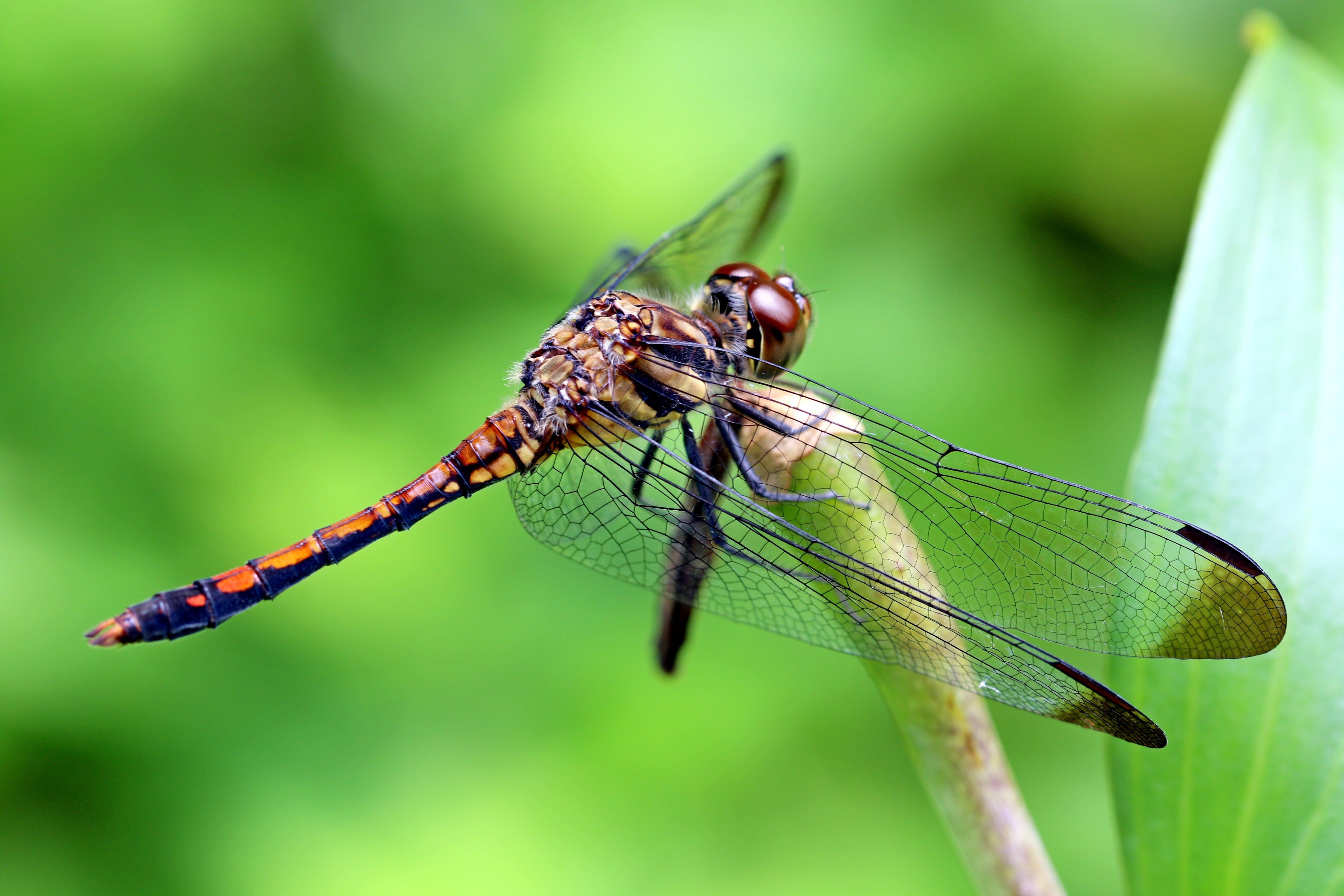 Kostnadsfri bild av fokus, insekt, makro, miljö