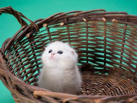 Free stock photo of animal, pet, sweet, kitten