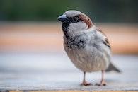 bird, blur, beak