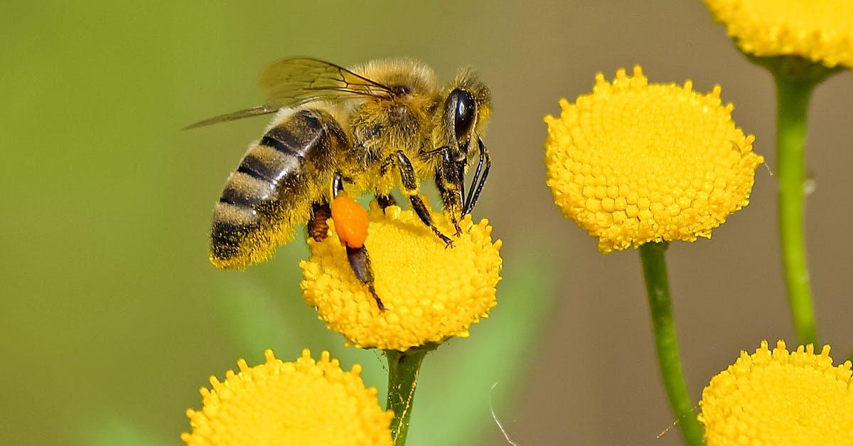 Мчс мир, пчелы красивые картинки