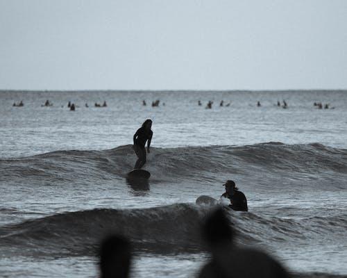 Immagine gratuita di fare surf, hawaii, oahu