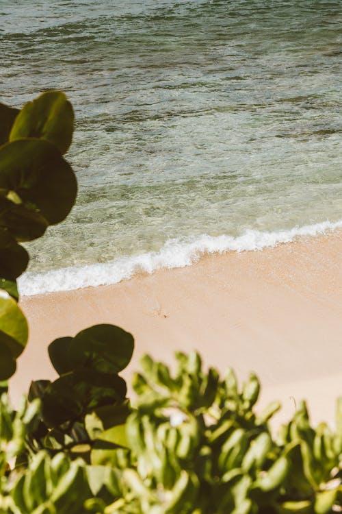 Ilmainen kuvapankkikuva tunnisteilla aallot, havaiji, hiekka