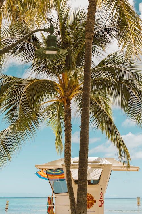 Palm Tree Near White Concrete Building