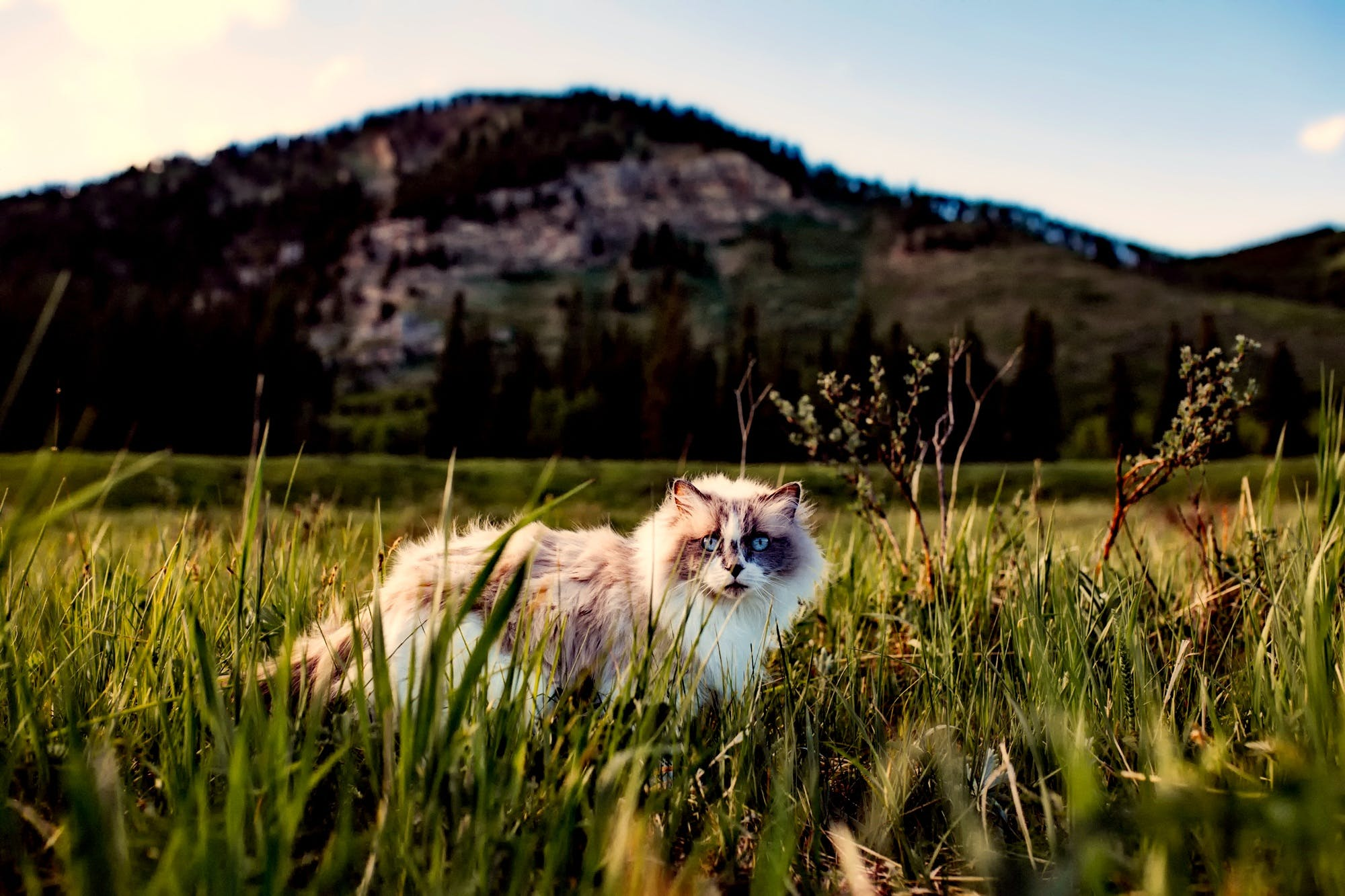 White Cat on Grass Field